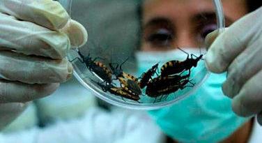 ATENCIÓN: ¿Qué es la enfermedad de Chagas, de la que hay posibles casos en el país?