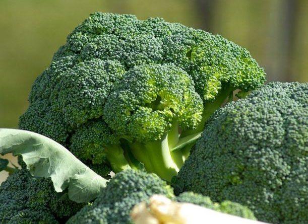 ATENCIÓN: Consumir brócoli ayuda a prevenir el cáncer y bajar el colesterol