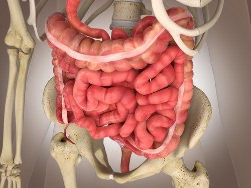 ALERTA: Infarto intestinal mesentérico: exámenes y tratamientos
