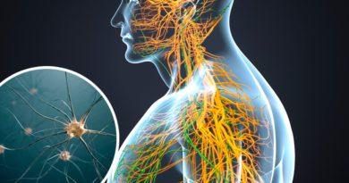 Partes del cerebro y sus funciones