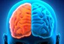 El cerebro y la mente