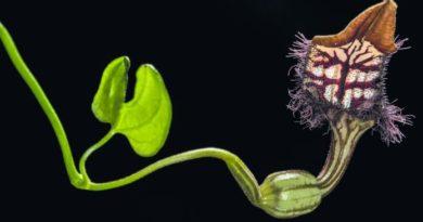 Tres especies no descritas fueron descubiertas RD