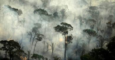"""""""El mayor repositorio de coronavirus del mundo"""": advierten que la próxima pandemia podría originarse en la Amazonía"""