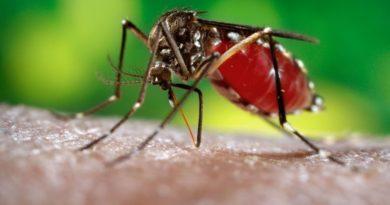 País registra 3,292 casos dengue y 18 muertes leptospirosis