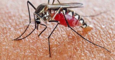Epidemiólogos advierten de enfermedades