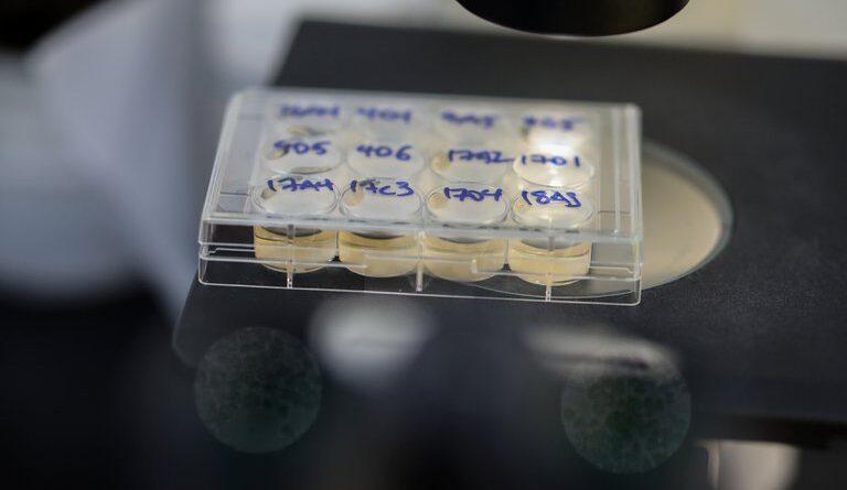 Las bacterias podrían ser la clave para curar el COVID-19, según un revolucionario estudio israelí