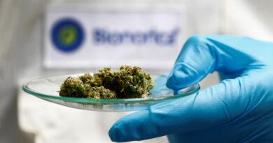 La OMS aprueba un protocolo para investigar medicamentos a base de plantas para el covid-19 en África