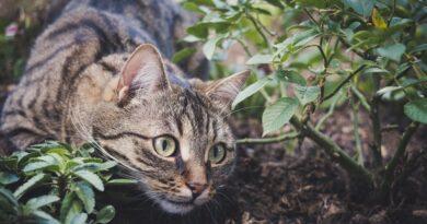 ALERTA: Mujer muere por rabia tras ser mordida por su gato en Colombia y declaran la alerta roja en varios municipios del país