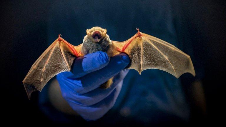 El biólogo que ayudó a rastrear el SARS hasta los murciélagos, ahora busca el origen del COVID-19