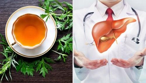 Propiedades del ajenjo para la salud de nuestro hígado