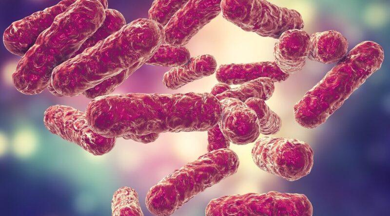 Bacterias que contaminan la carne