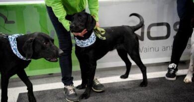 Francia comenzó a utilizar perros para detectar el coronavirus a través de la transpiración humana