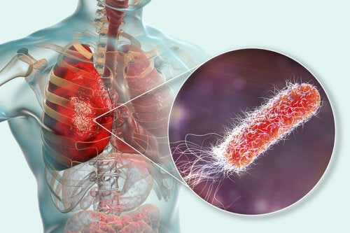 ¿Existen bacterias en los pulmones?