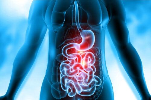 ¿Cuánto tarda el estómago en digerir los alimentos?