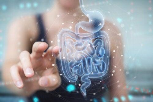 Bacterias benéficas: ¿cuáles son y qué beneficios tienen en nuestro cuerpo?
