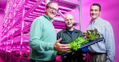 Un jardinero de 66 años descubre que la cúrcuma alivia el dolor de la artritis, pero tiene un efecto secundario que le cambia la vida. Lee su historia...