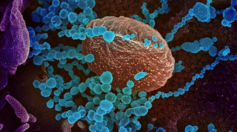 Hallan una nueva forma de transmisión del COVID-19, lo que daría pistas de cómo combatir al virus