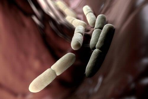 Síndrome de fermentación automática: ¿por qué ocurre?