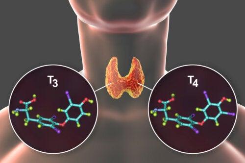 Tiroxina: qué es y enfermedades asociadas